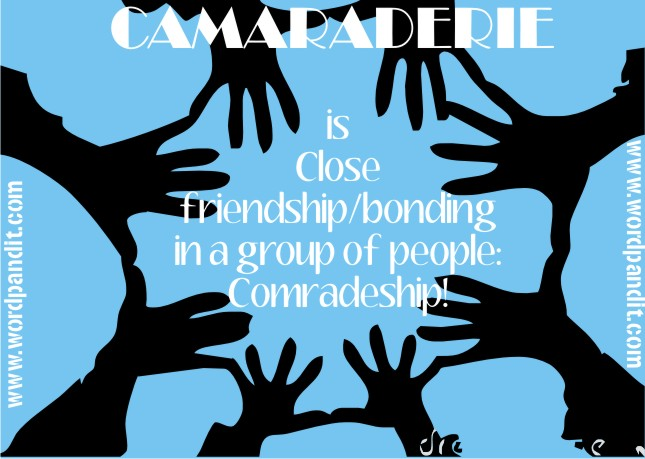 camaraderie - definition - What is